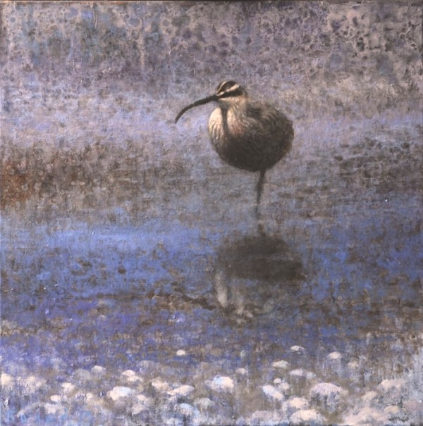 ewoud-de-groot-wildlife-whimbrel-2013