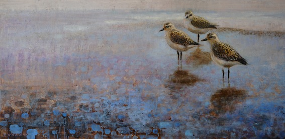 ewoud-de-groot-wildlife-birds09