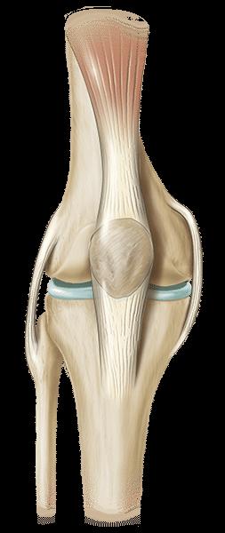 Total Knee Replacement – wwwexac