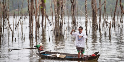 A fisherman casts his net among treetops at the edge of the Belo Monte Dam reservoir, near Altamira, Brazil. But the once-rich fishing grounds yield far fewer fish than before an fishermen are constantly snagging their nets on submerged trees. Photo: CNS