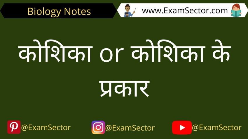 Types of Cells Notes in Hindi