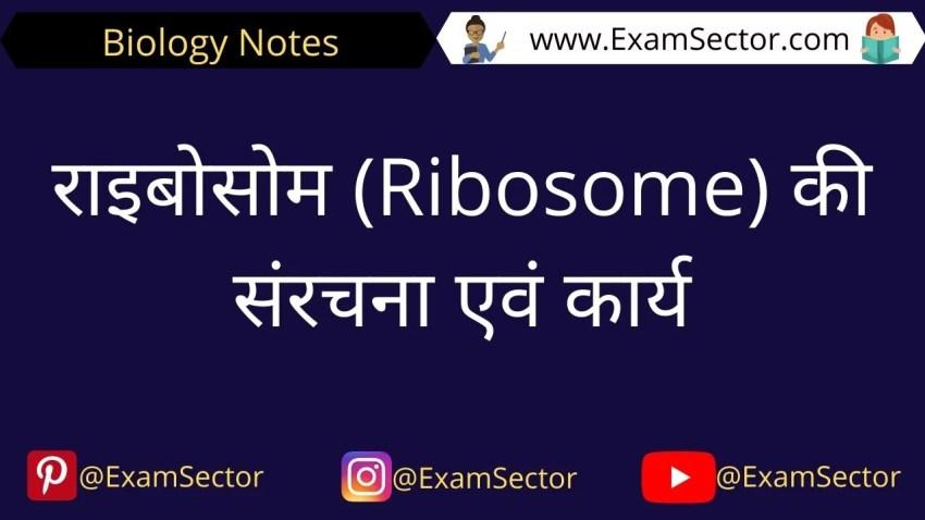Ribosome Notes in Hindi