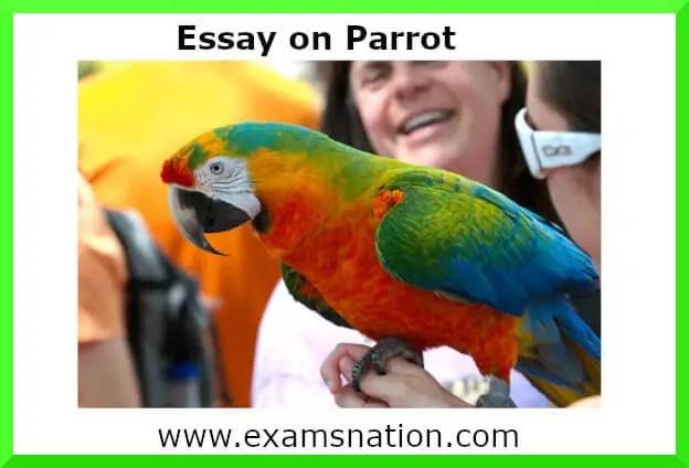 parrot essay