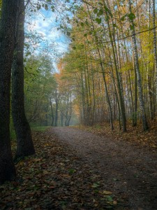 """Autumn road""  Taken by Flickr.com user Alexey Kljatov October 15, 2012 Creative Commons License"