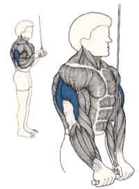ejercicio para triceps polea