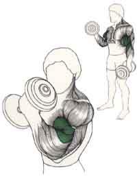 ejercicio para biceps con mancuerna