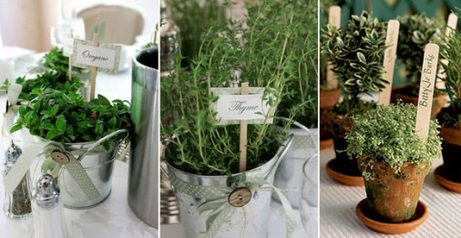 Lovely plants & decors from Winerose.com