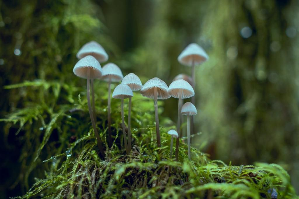 science participative,biodiversité,jardin