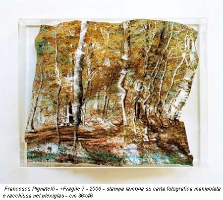 Francesco Pignatelli - +Fragile 7 - 2006 - stampa lambda su carta fotografica manipolata e racchiusa nel plexiglas - cm 36x46
