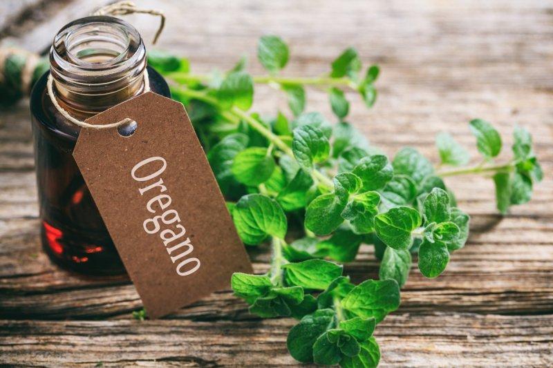Nadzwyczajne właściwości olejku z oregano