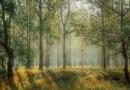 Forestazione: La Regione Calabria approva Piano antincendi boschivi 2021
