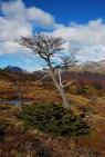 Baum beim Lago Esmeralda
