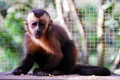 kleiner Affe (der mir am Ohr kaut)