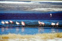 Flamingoooos!!!