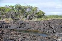 Elizabeth Bay - Isla Isabela 1