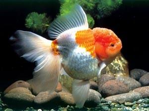 Gartenteich fr Goldfische  ExklusiveGartenteiche