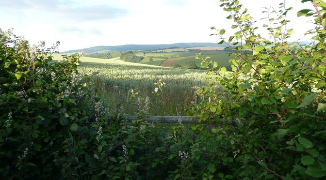 Could you Become a Parish Member of Exmoor National Park Authority?