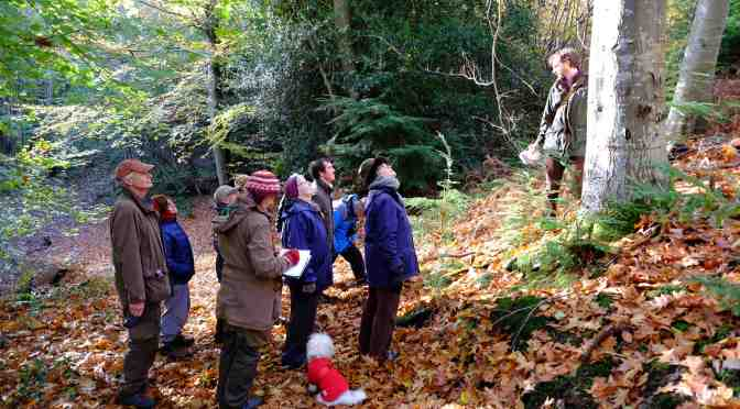 AWARD FOR EXMOOR'S WOODLANDS