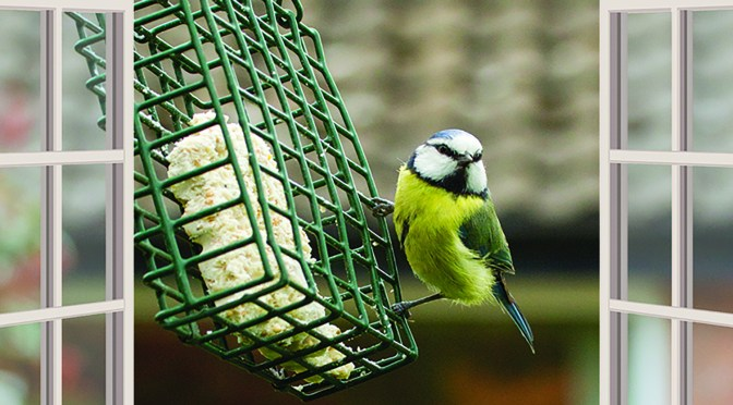 SOMERSET WILDLIFE TRUST LAUNCHES #WILDLIFEWINDOW SOCIAL MEDIA CAMPAIGN TO LET WILDLIFE HELP OUR WELLBEING DURING SELF ISOLATION AND SOCIAL DISTANCING