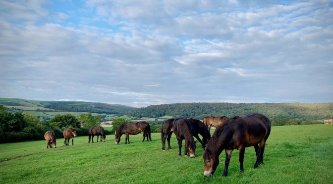 Exmoor Ponies rescue the Exmoor Pony Project – with their compost!