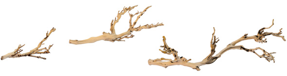 Forest Branch