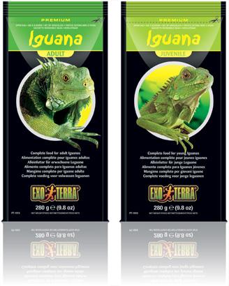 Iguana Juvenile and Adult