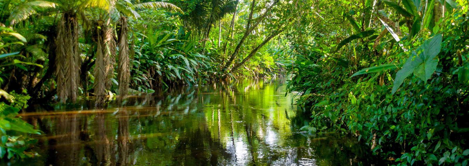 Amazon Rainforest Tours