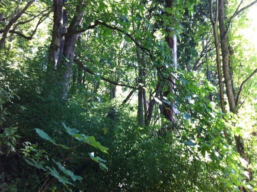 Gorgeous, lush, green jungle-like trees meet the beach.