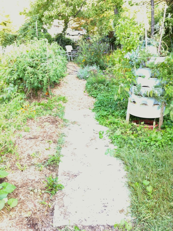 Here's one of our aisles, carpet laid down and partially covered with wood chips (I've put a call into the city for more . . .). Notice the Garden Tower to the right (www.gardentowerproject.com). We've found that aisles treated this way discourage weeds for about three years in this climate, and then need to be replaced.