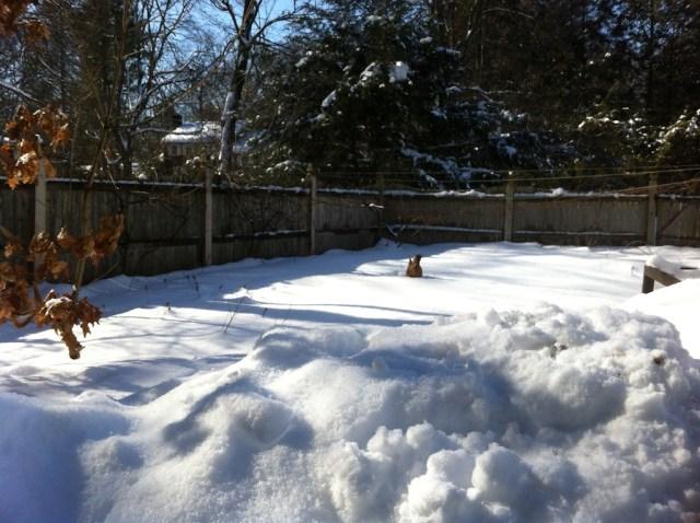 stranded chicken