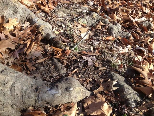 tree roots, leaves, pee