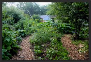 garden-july-2016