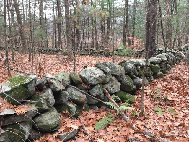 One of New England's ubiquitous rock walls. This one in amazing shape!