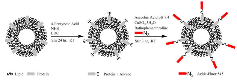 Surface Functionalization of Exosomes Using Click