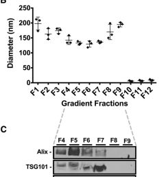 large amounts of nondigested commercial dairy milk micrornas are associated with exosomes fresh commercial dairy milk 60 ml n 3 was subjected to the  [ 759 x 1800 Pixel ]