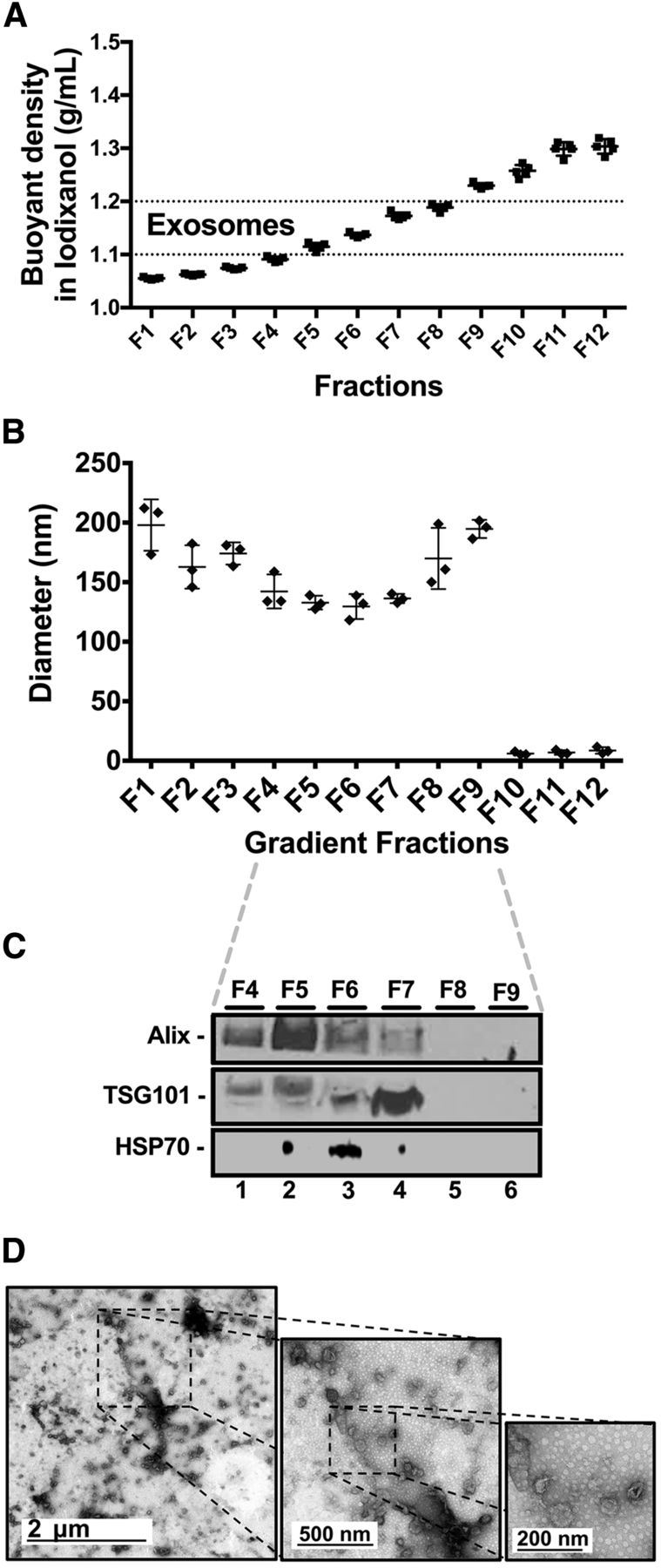 hight resolution of large amounts of nondigested commercial dairy milk micrornas are associated with exosomes fresh commercial dairy milk 60 ml n 3 was subjected to the