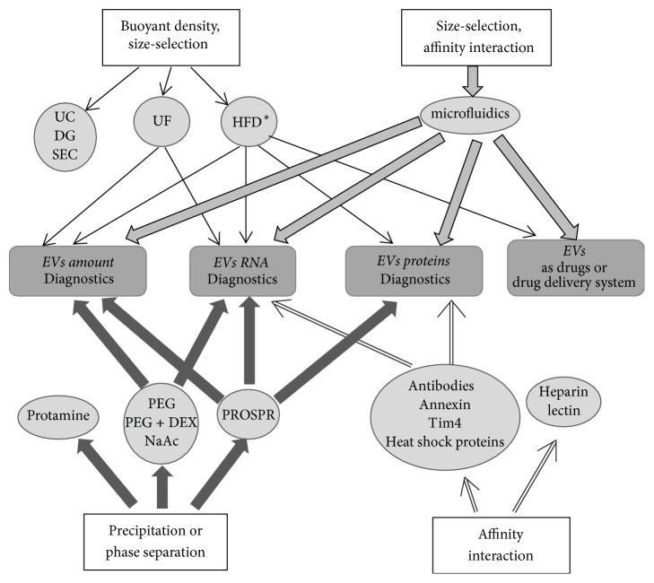 Isolation of Extracellular Vesicles: General Methodologies