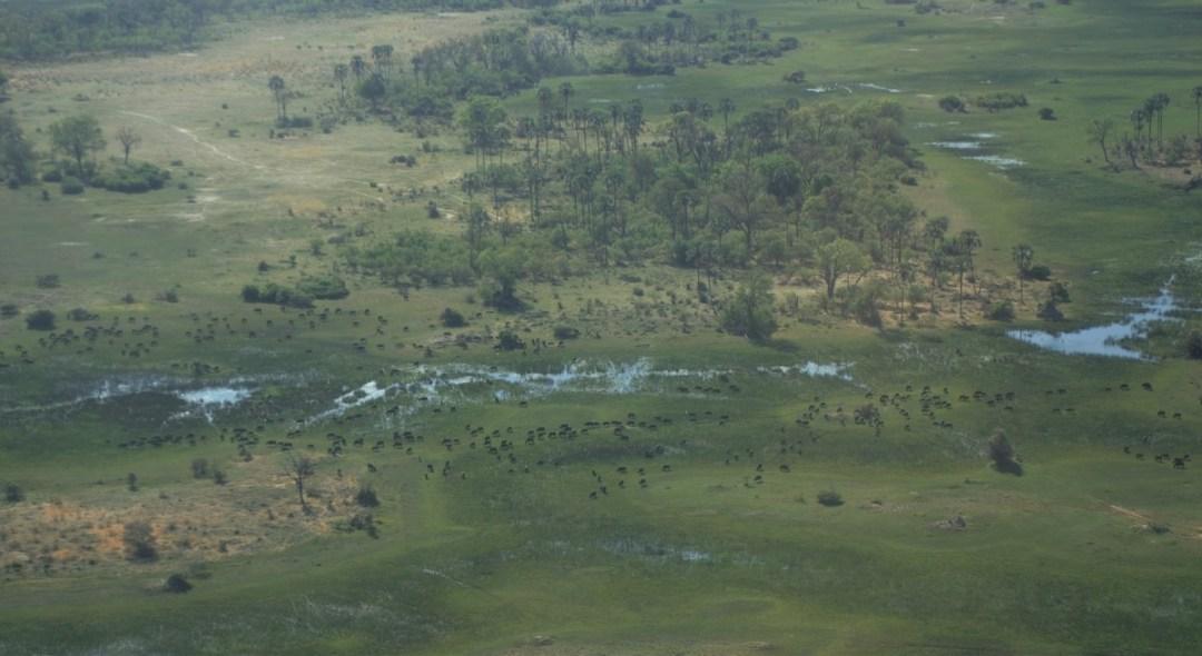 botswana-post-picsokovango-delta-view1