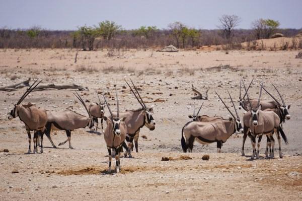 best-pics-namibiadsc08455