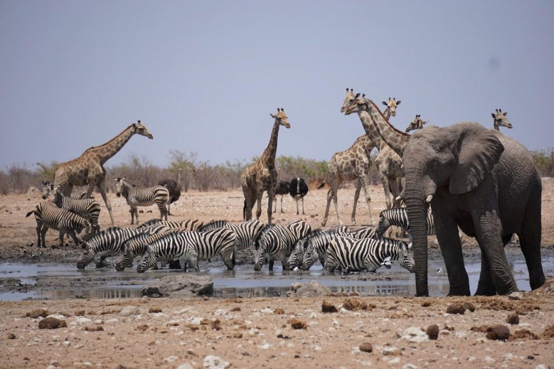 best-pics-namibiadsc08514