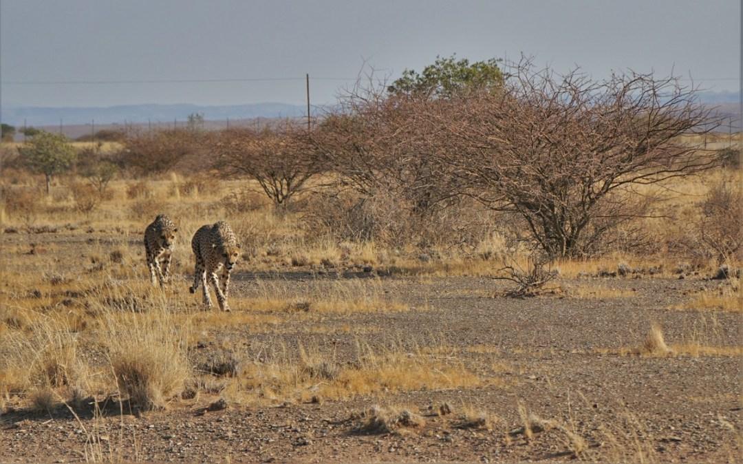 best-pics-namibiadsc09509
