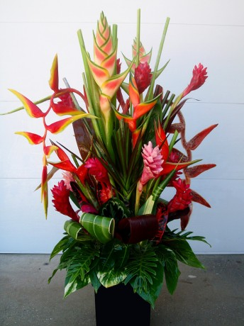 Fresh Cut Tropical Flowers  Exotica Tropicals  Tropical