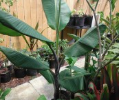 tropical plants nursery melbourne