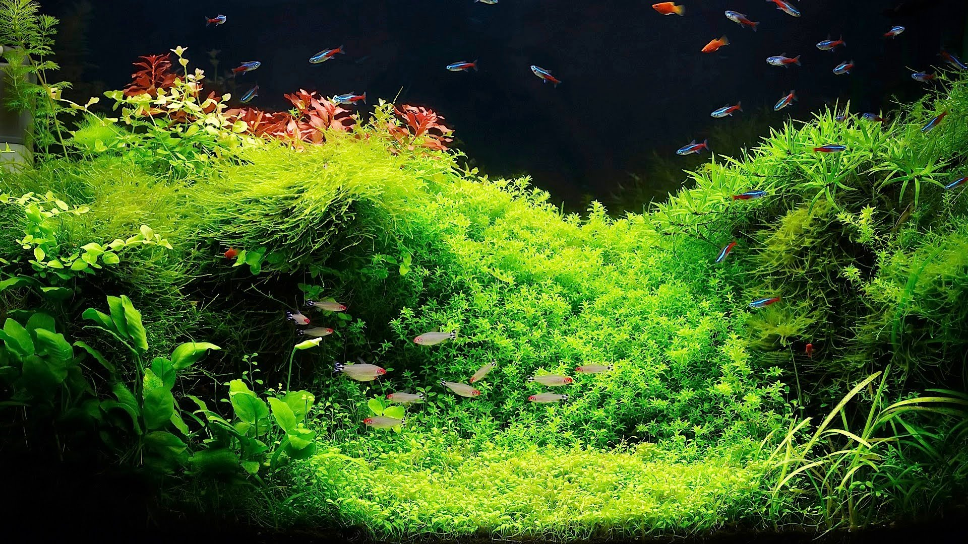 picture of fish tank plants