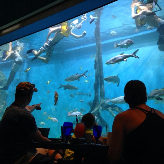 picture of a fish tank in a restaurant
