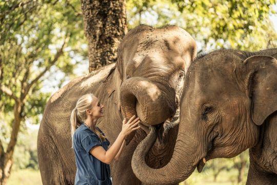 elephant anantara