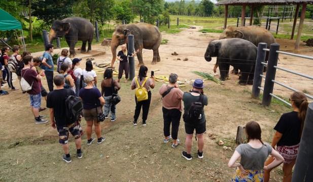 elephant wfft