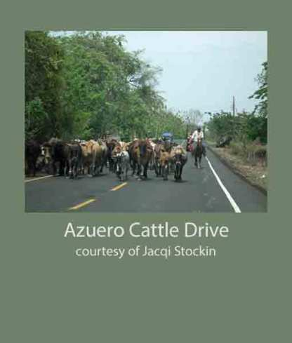 Azuero Cattle Drive