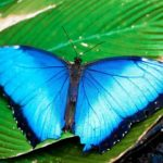 butterfly-haven