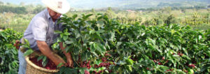 A Brief History Costa Rican Coffee 101